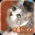 梦猫DS 移植版