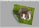 Rainbow mac版V1.17 官方版
