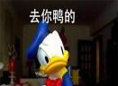 今天也要加油鸭表情包