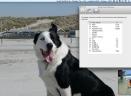 SmashTunes for MacV3.2 Mac版