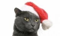 给头像p圣诞帽的软件app原创推荐
