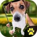 iDog狗在屏幕上苹果版