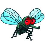 苍蝇直播盒子vip破解版 V1.0 破解版