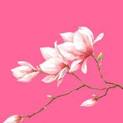 花瓣直播 V1.0 安卓版