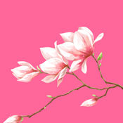 花瓣直播间 V1.0 安卓版