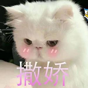 我是你最娇嫩的小猫咪表情包
