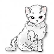 猫和纸箱 V1.0 苹果版