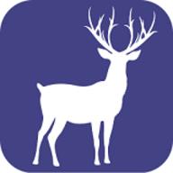 迷鹿旅行 V1.0.0 官方版