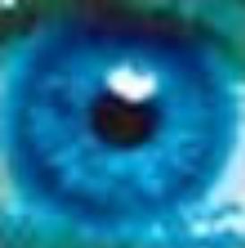 第三只眼监控软件 V16.8 官方版