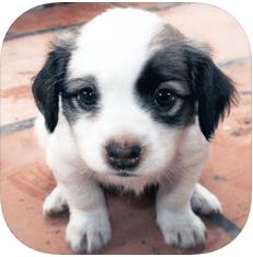 模拟宠物养成 V1.0 苹果版