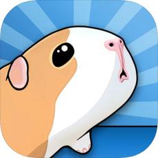 豚鼠桥 V1.7.5 苹果版