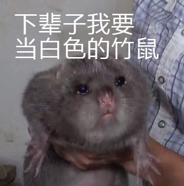 华农兄弟竹鼠表情