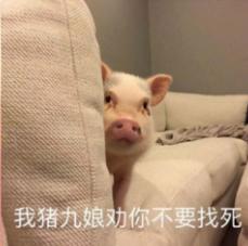 小猪仔悄咪咪探头搞笑表情包