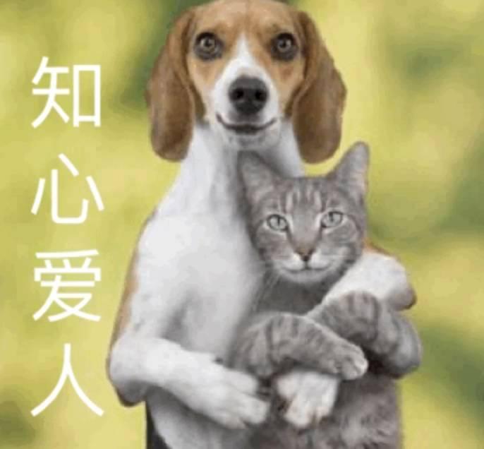 知心爱人猫狗搞笑表情包电脑版