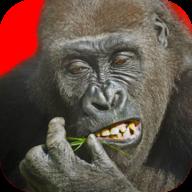 �w行大猩猩 V2.53 安卓版