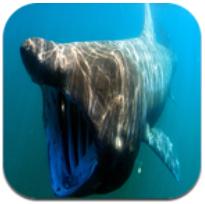鲨鱼的世界 V17.02 安卓版