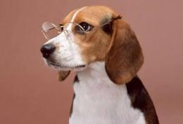 狗字成语 含有狗的成语及释义