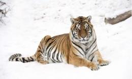 虎字成语 含有虎的成语及释义