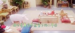 《向往的生活》第二季第5期王珞丹带来的粉猪在哪买的 购买链接多少钱
