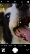 苹果iphone拍摄微距特写方法教程