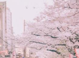 抖音app张嘴吹出樱花雨特效拍摄方法教程