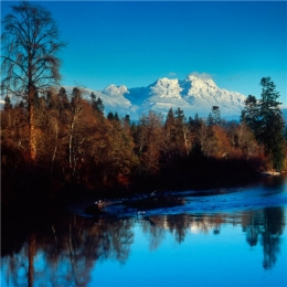 微信最吉利的好看头像风景大树 大树头像图片风景吉利好看