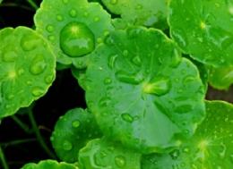 下雨天唯美心情说说 朋友圈下雨天唯美的心情说说