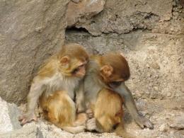动物园猴子砸玻璃是怎么回事 动物园猴子砸玻璃是什么情况