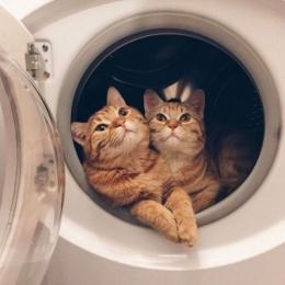 可爱猫咪情侣头像一对2020最新 2020最新萌猫咪情侣头像一对