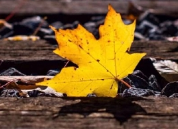 一秒入秋的朋友圈说说 2019天气冷变化快的说说