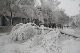 黑龙江大雪封高速是怎么回事 黑龙江大雪封高速是什么情况