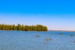 亚洲最大沙漠水库变身天鹅湖是怎么回事?