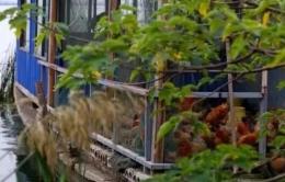 阳澄湖超千家农家乐无照经营是怎么回事?