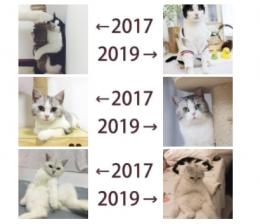 """""""2017和2019的对比""""是什么梗 """"2017和2019的对比""""是什么意思"""
