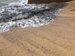 澳大利亚山火致悉尼海滩变黑是怎么回事?