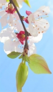 春天最美景色手机壁纸 抖音最火风景壁纸小清新
