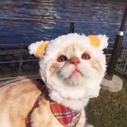 QQ头像猫可爱搞怪大全 萌萌哒小猫搞怪可爱QQ头像