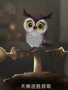 哈利波特魔法觉醒猫头鹰获取攻略