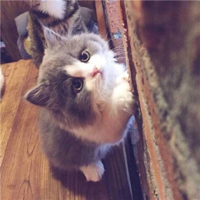 2018最新萌猫咪情侣头像一对 超可爱的情侣猫咪头像