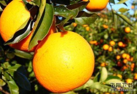 我去买几个橘子你站在此地不要走动什么梗我去买几个橘子表情包分享