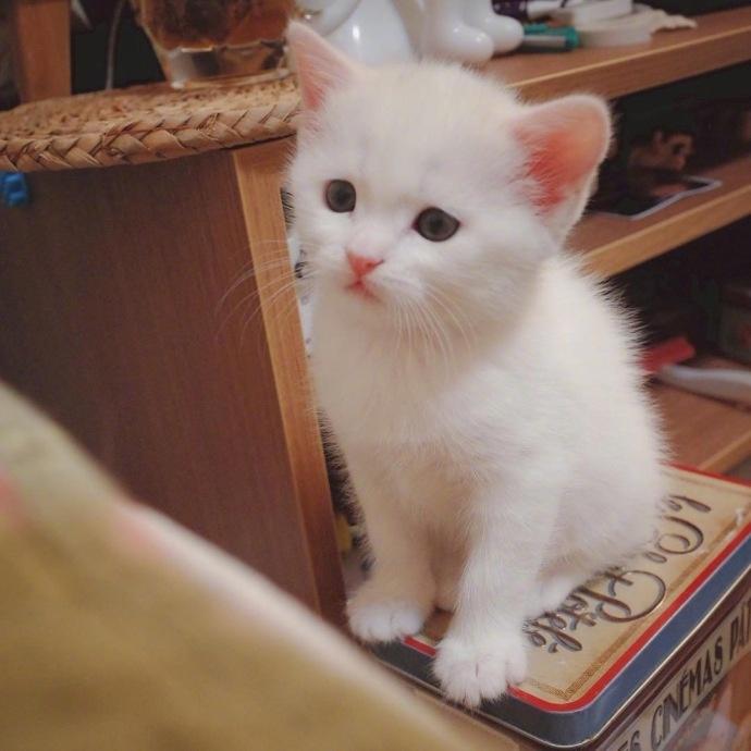 2018最新超可爱猫咪头像大全