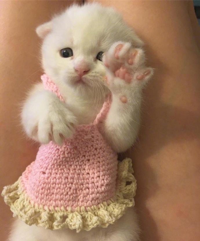 超可爱猫咪微信头像精选_2018最新超可爱猫咪微信头像