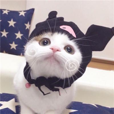 2018超可爱萌猫情侣闺蜜头像高清 2018高清超萌超可爱的猫咪图片精选