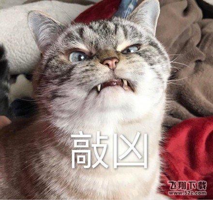 可爱小猫咪聊天背景图片