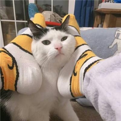 2018最火情侣头像一对两张猫超萌 2018最新超可爱萌猫咪情侣头像一对