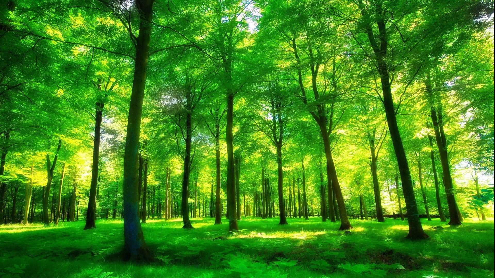 夏至唯美小清新绿色高清壁纸大图_2018夏天清爽壁纸高清图片大全