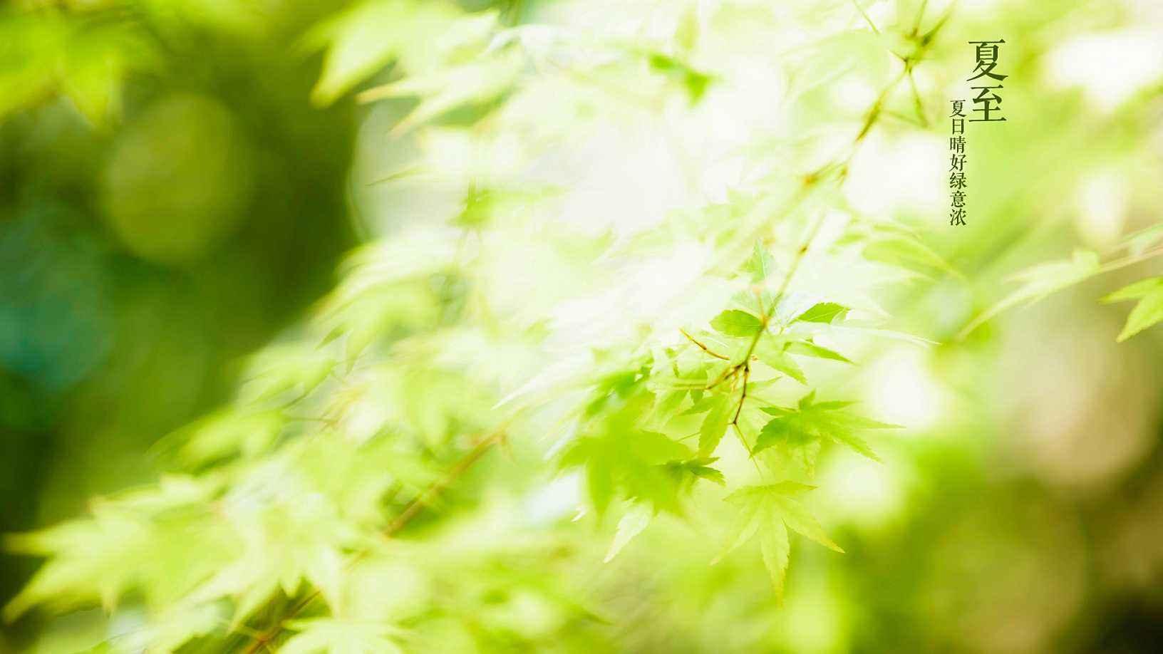夏至唯美小清新绿色高清壁纸大图 2018夏天清爽壁纸高清图片大全