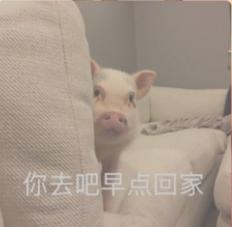 小猪仔悄咪咪探头搞笑表情包_52z.com
