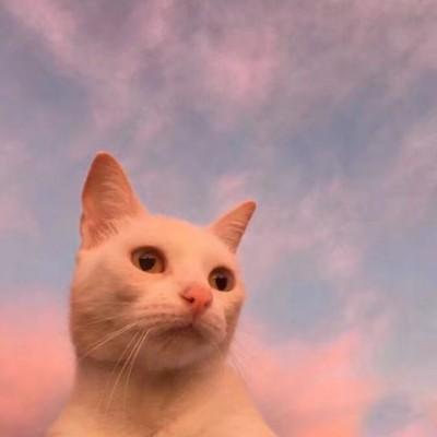 微信头像猫咪可爱搞怪2019 2019超萌猫咪微信可爱头像精选