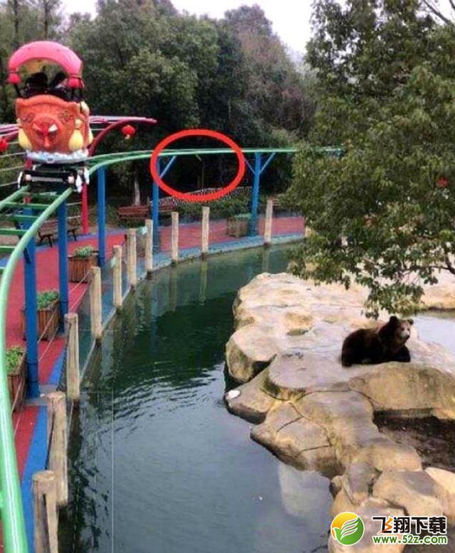 误将手机投喂棕熊是怎么回事 误将手机投喂棕熊是什么情况_52z.com